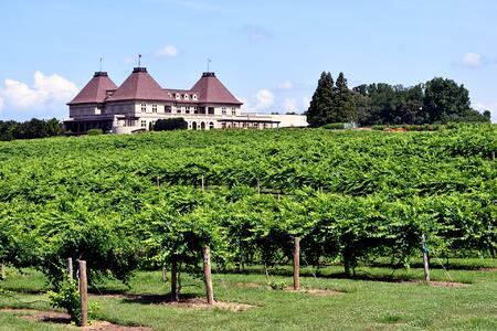 Image of Wine Vineyard and Wine Production House